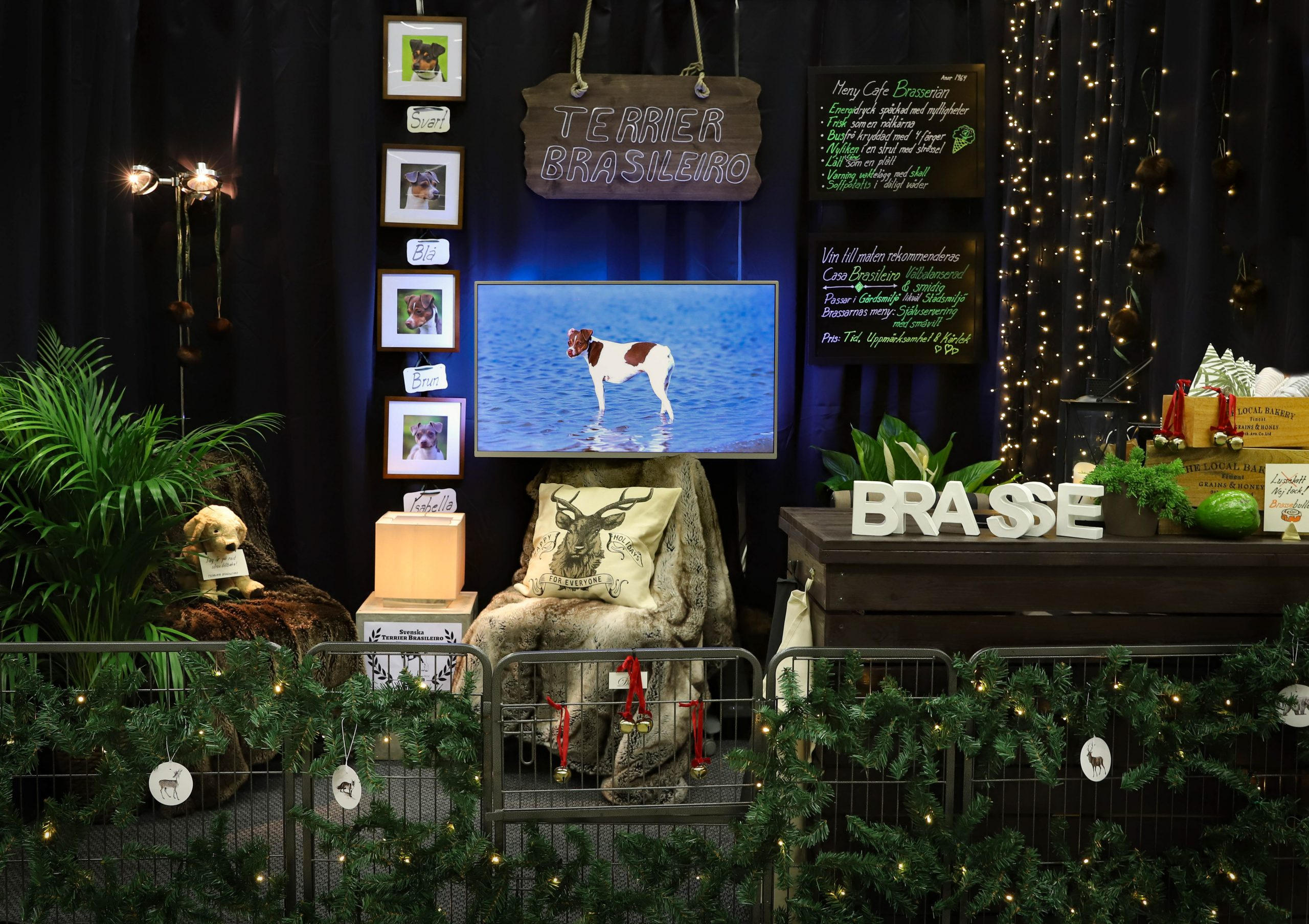 Terrier Brasileiro Rasmonter Stockholms Hundmässa 2019